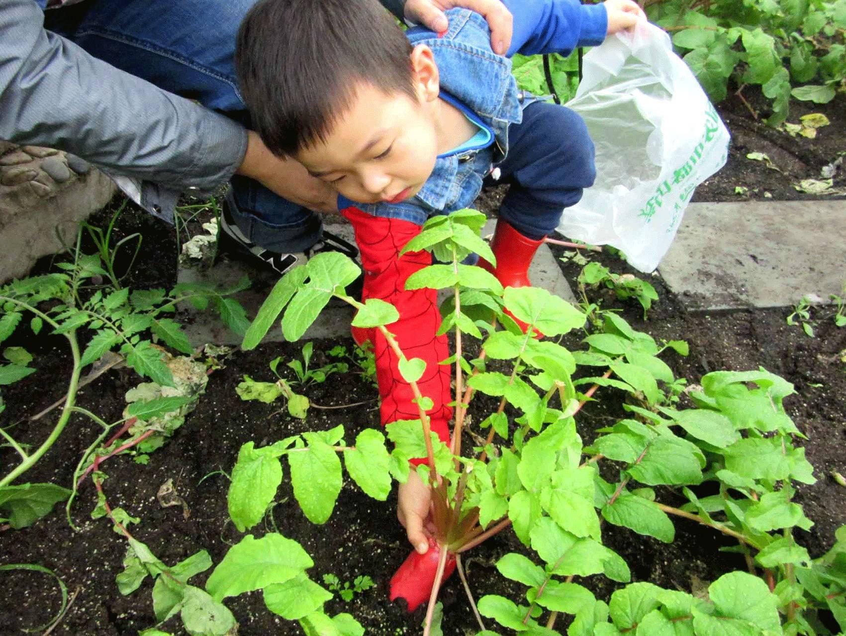 豆子手工制作蔬菜