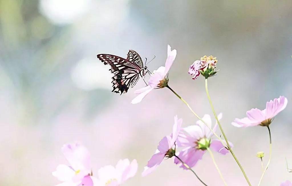 音画|| 萨克斯《新鸳鸯蝴蝶梦》,好听!