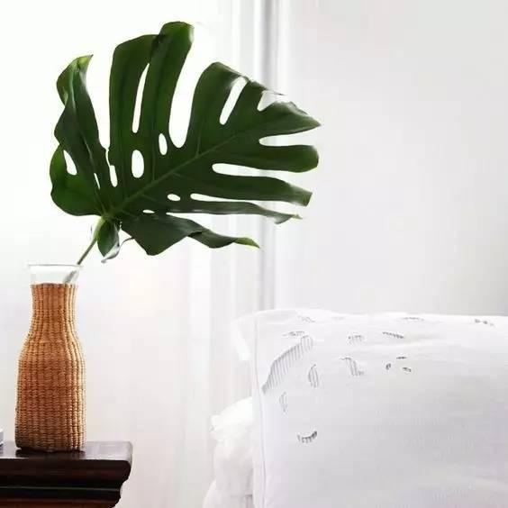 好看好养还便宜的北欧风植物!不用绿植装扮的家总是少图片