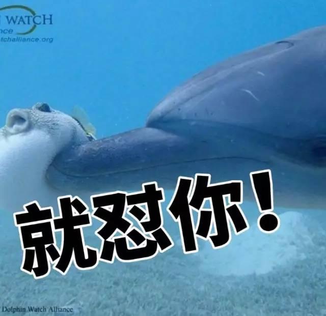 最强动物园丨你知道海豚为什么喜欢跳来跳去吗?