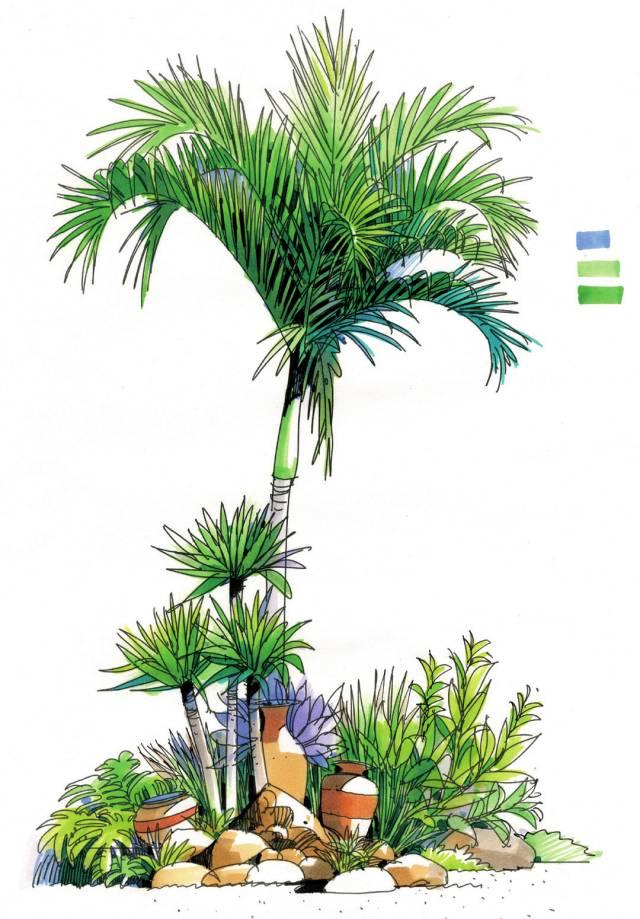 植被手绘效果图