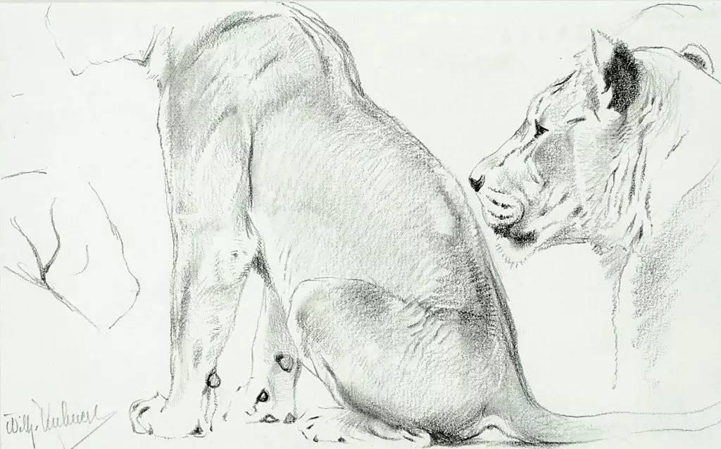 德国画家动物素描 | 库纳特
