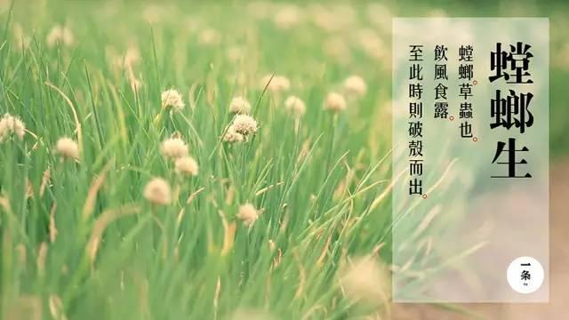芒种节气的花简笔画