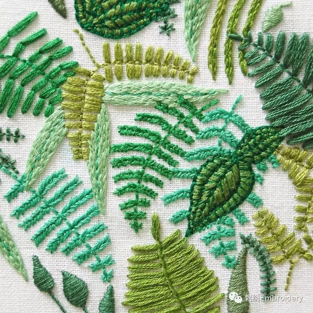 壁纸 植物 蕨类 1080_1080