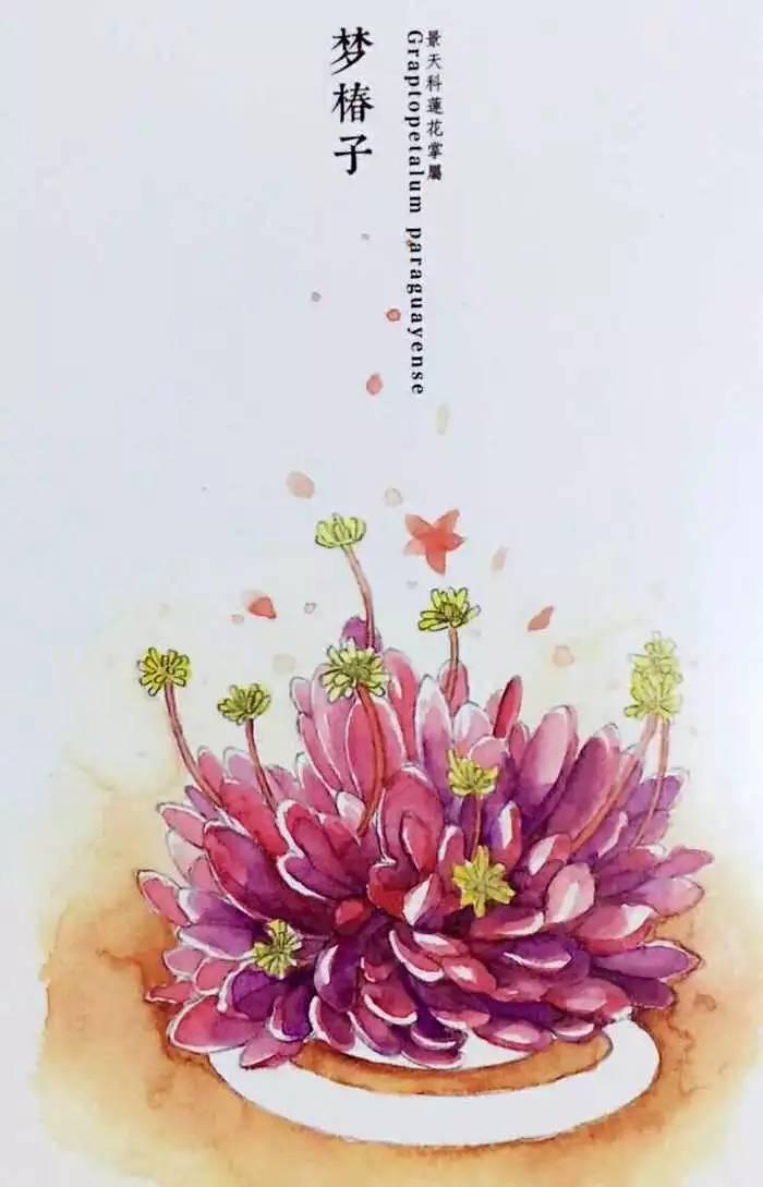 多肉植物的彩绘手绘美图
