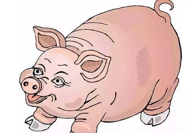 幅上涨,不过是套路,预测一周后猪价行情怕是残不忍赌