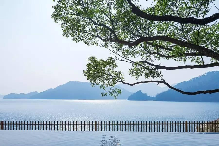 同时,放眼整个千岛湖的酒店群,这家山水间的湖景视野堪称一绝,你将
