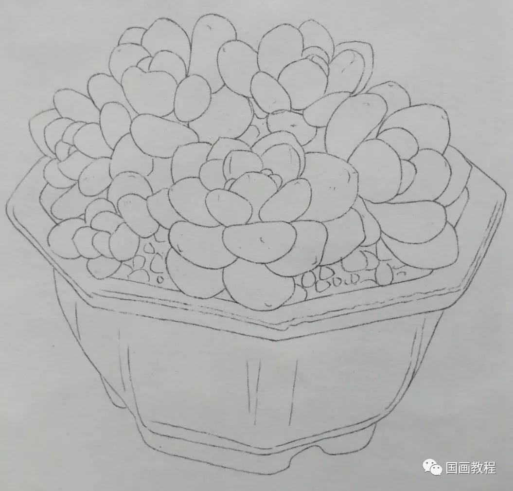 多肉植物的步骤画法,美美哒(1)