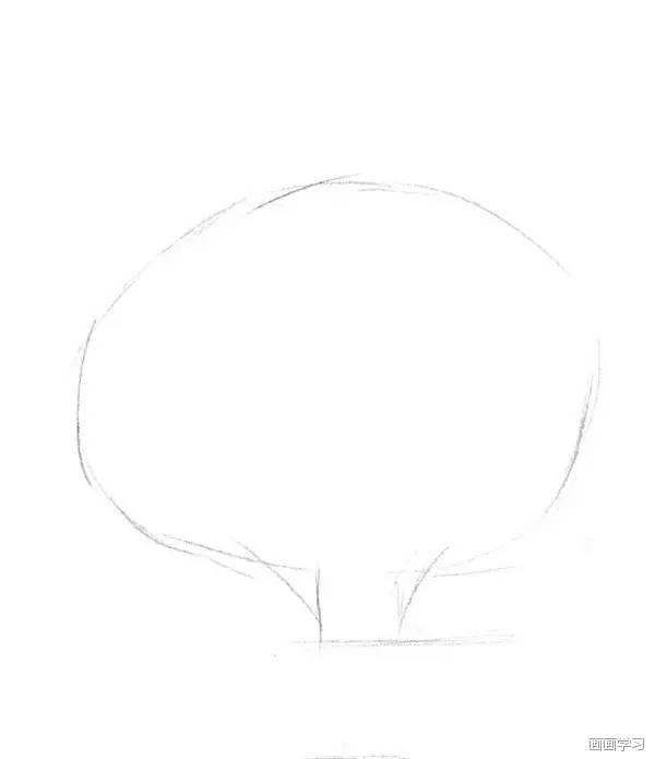 03 素描冬青  冬青,叶薄革质,狭长椭圆形或披针形,长5cm~11cm,宽2cm