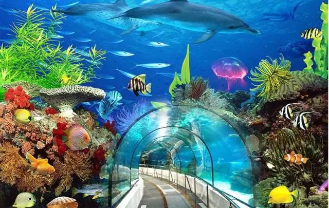 去海洋馆和海里的小动物来一次亲密接触