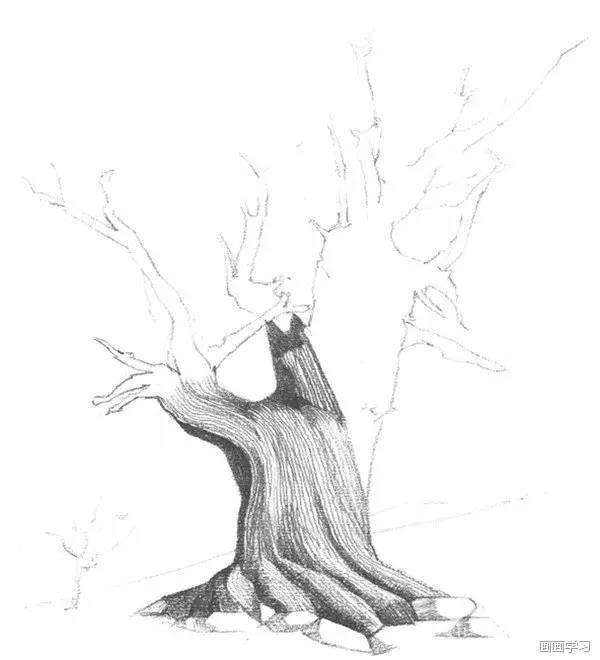 用软一点的铅笔画出轻松的线条,刻画一遍枯树,整体调整.