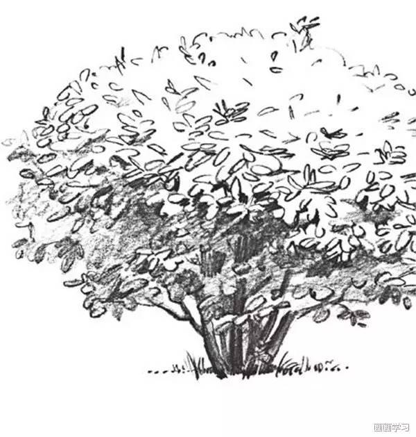 用坚硬的铅笔画出松树的松枝,整体调整,这样松树就画完了.