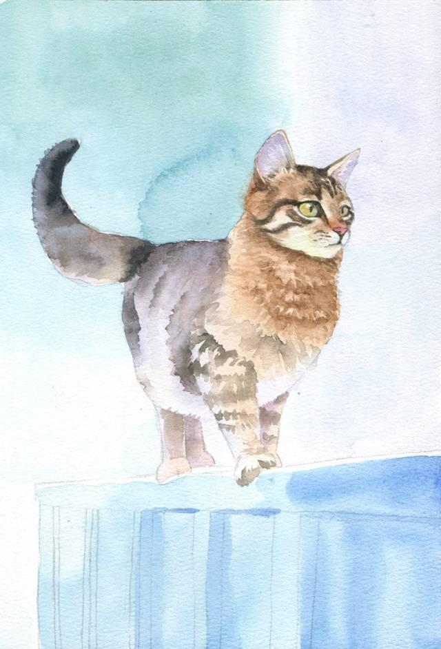 教程|教你用水彩画一只栅栏上的小萌猫!