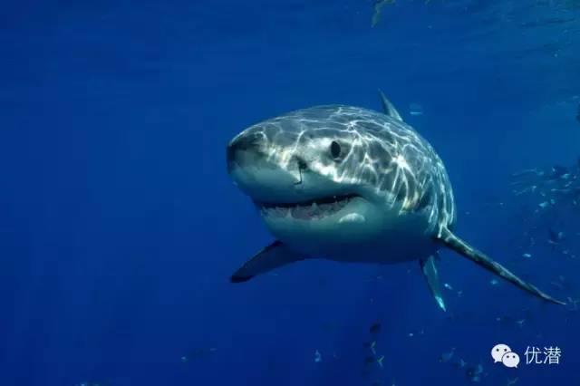 六次史诗般的海洋动物大迁徙