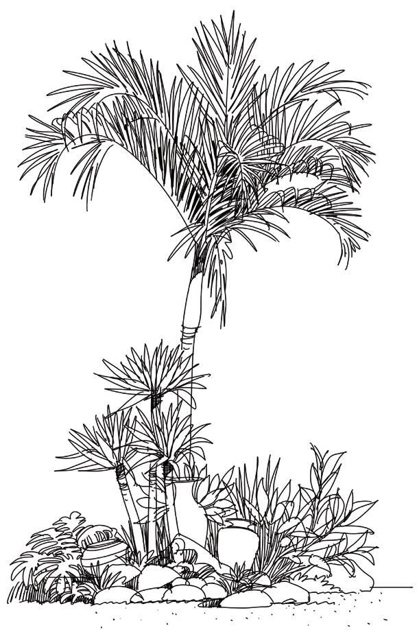 1. 钢笔线稿注意植物的层次搭配和景观小品的疏密关系.