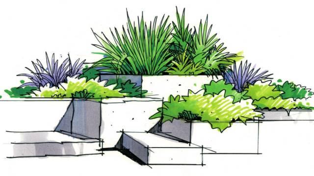 除了乔木,灌木,草本植物,我们也把棕榈科植物单独列出来讲解.