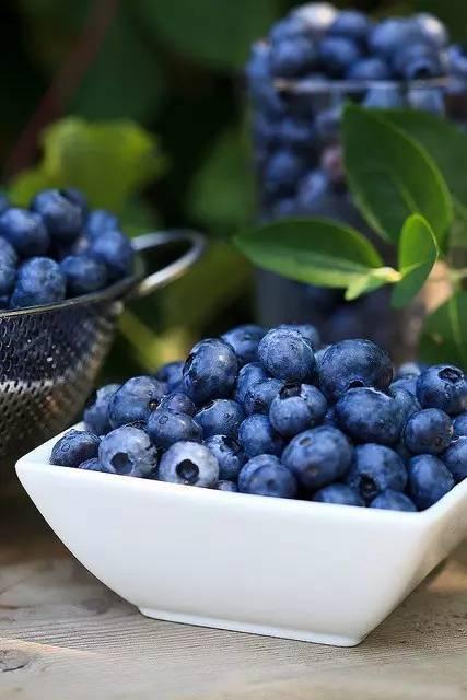 青浦蓝莓熟了,老板请你免费畅吃