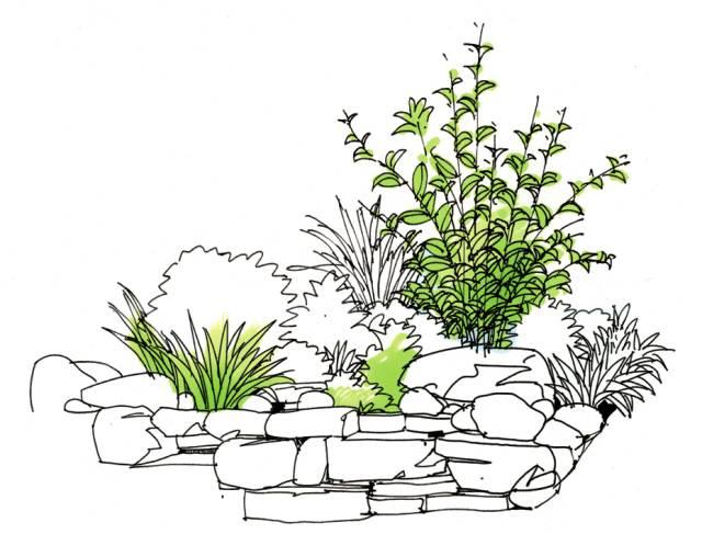 马克笔上色先用浅色把相同颜色植物铺上大色调 .