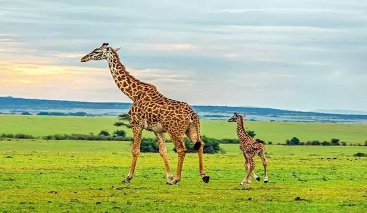 旅游 正文  safari野生动物园 富国岛safari野生动物园是越南最大的