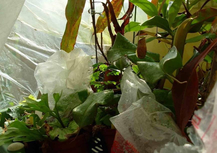 其实养花有大用途.天气比较干燥的时候,可以用塑料袋来保湿.图片