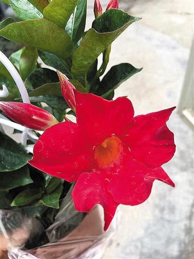 【生活】窗台上放排花让你家成为风景线