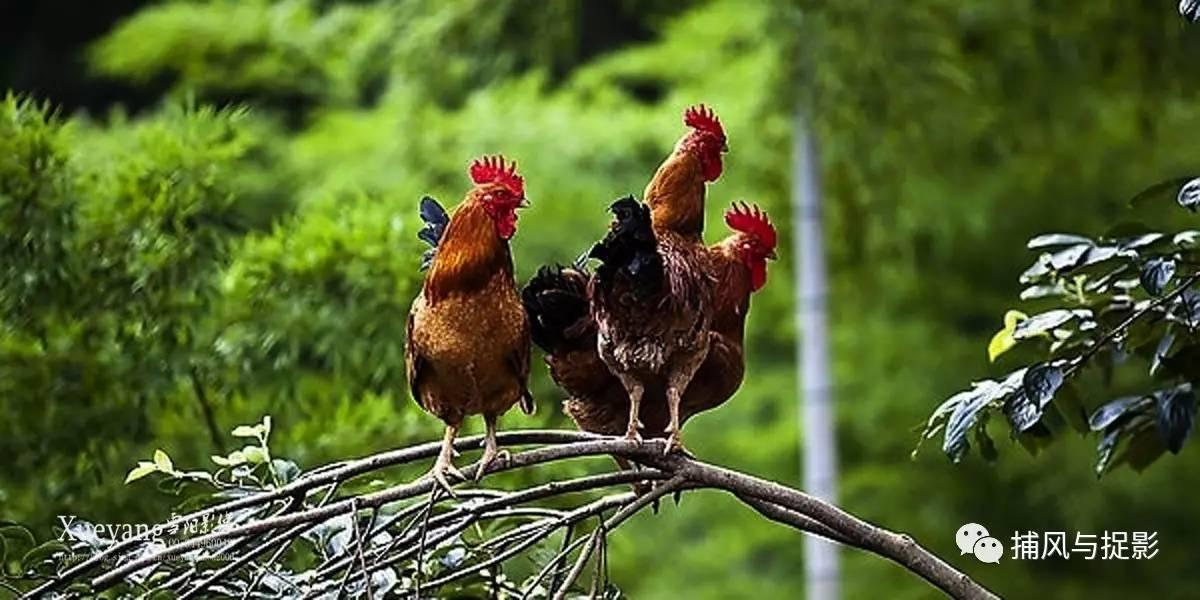 树林里大叔大妈大野鸡_大叔大妈树林交易_树林里大叔大妈大野鸡