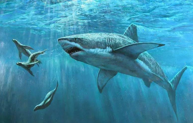 壁纸 动物 海洋动物 鱼 鱼类 桌面 776_495