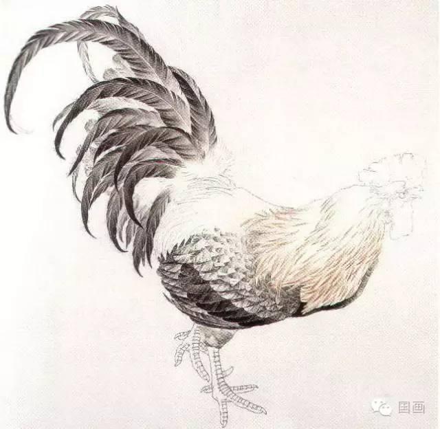 动物 国画 鸡 640_624