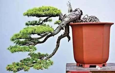 一字道出了人不能离开绿色的树木而生存.