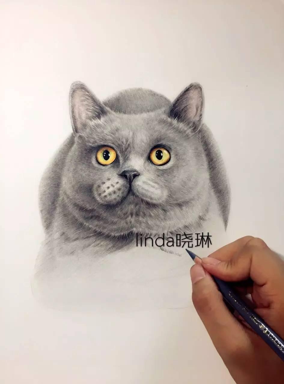 彩铅达人绘 | 猫咪绘(晓琳手绘)