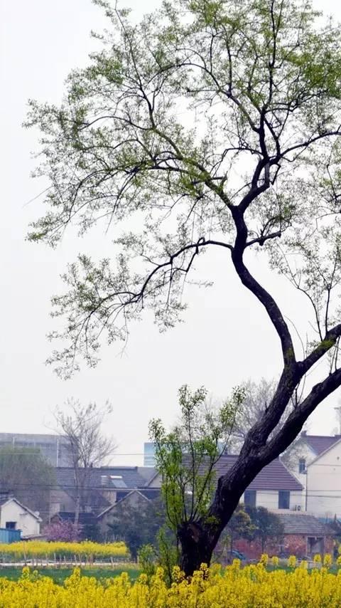 磨头乡村风景手机屏保10幅,叫网络刮起一阵乡村风.