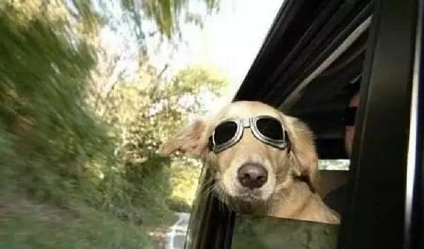 开车带狗出门,不注意这些宠物会很危险!