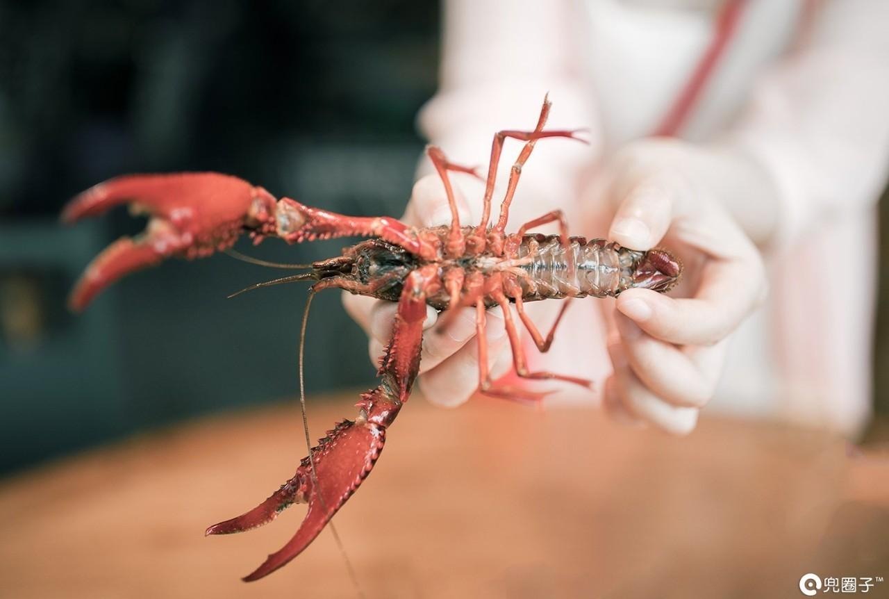 当宠物20年!132岁龙虾重返大海网友担心它的未来
