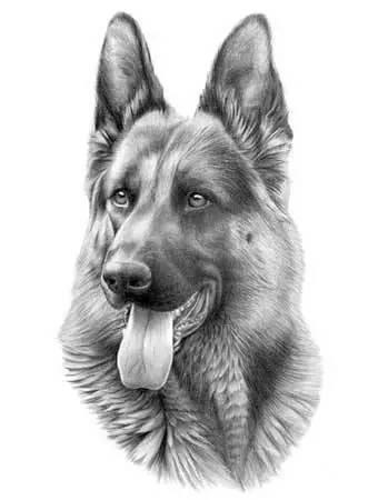 写生素描在表现内容上分为 静物,动物,风景,人像及人体素描等.