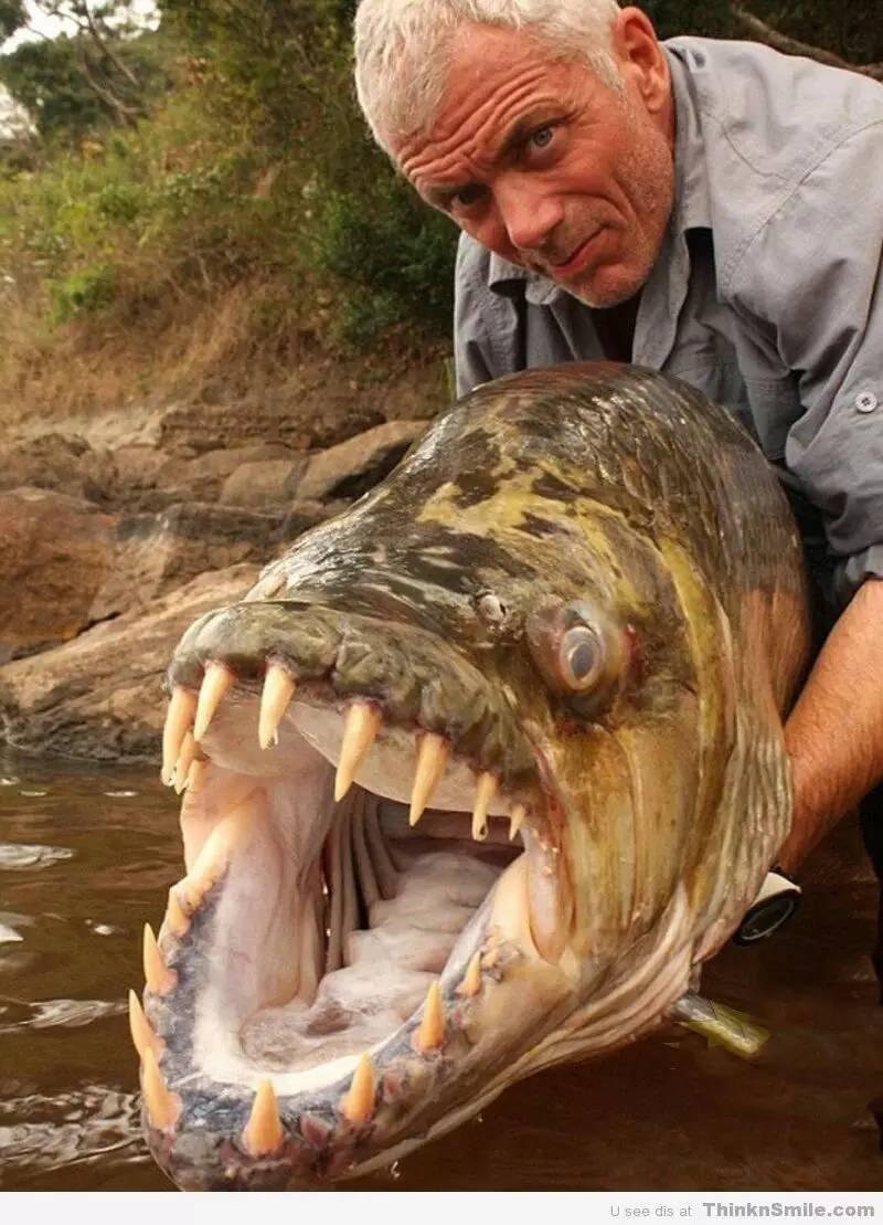 虎鱼 tigerfish