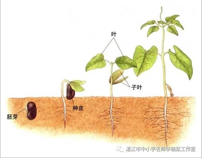 【生物】种子发芽