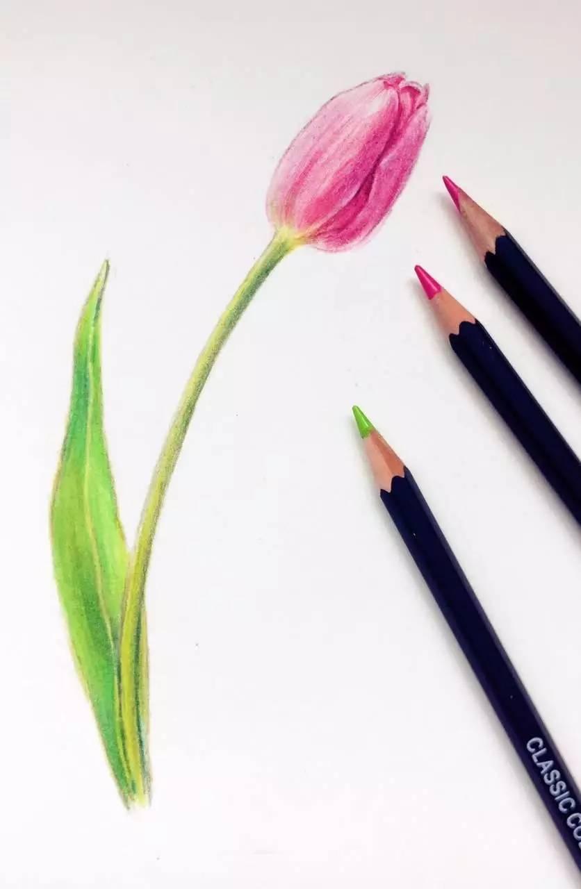 沙龙| 6月17日彩铅手绘