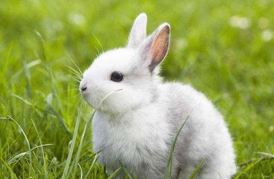 难过兔子图片大全可爱