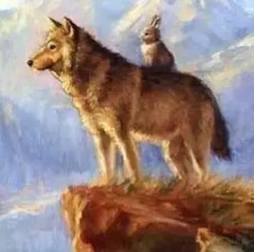 """啊?""""   猫狐狸兔子乌龟狗狮子狼怎么编一个故事狐狸和狼是狮子的手"""