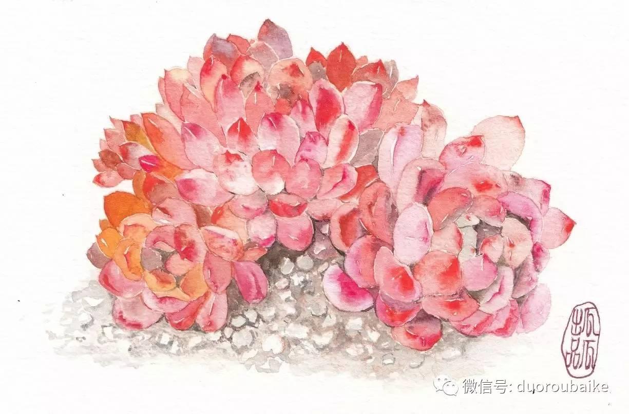 """""""寻找中国最美多肉""""手绘作品选登:瓜瓜的手绘多肉"""