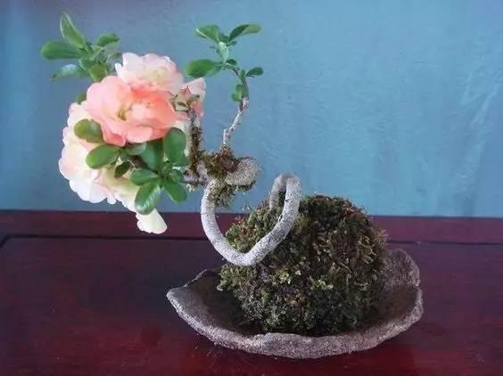 (欣赏)文艺小清新的盆景玩法--苔玉