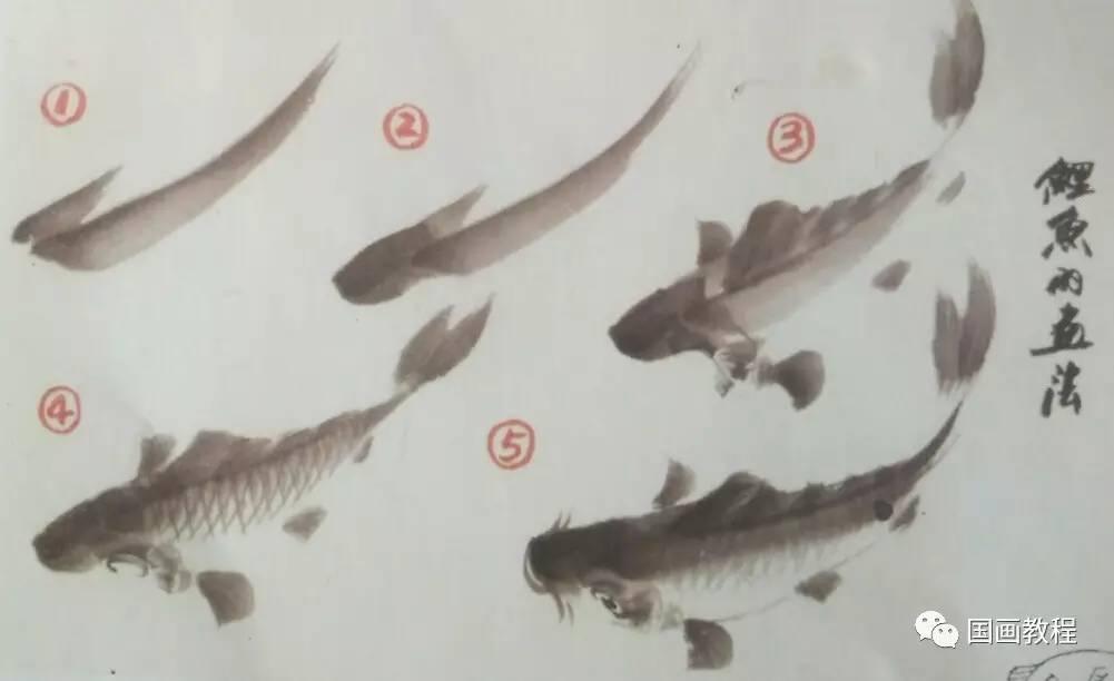 【国画教程】15集,鲤鱼的画法