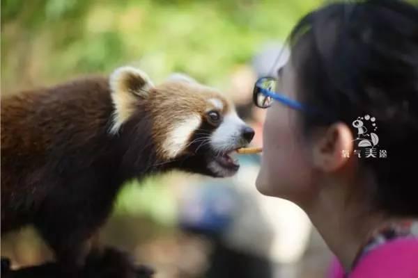 在这里,你就是被可爱的小动物们邀请来的客人 它们虽然不会说话,但是