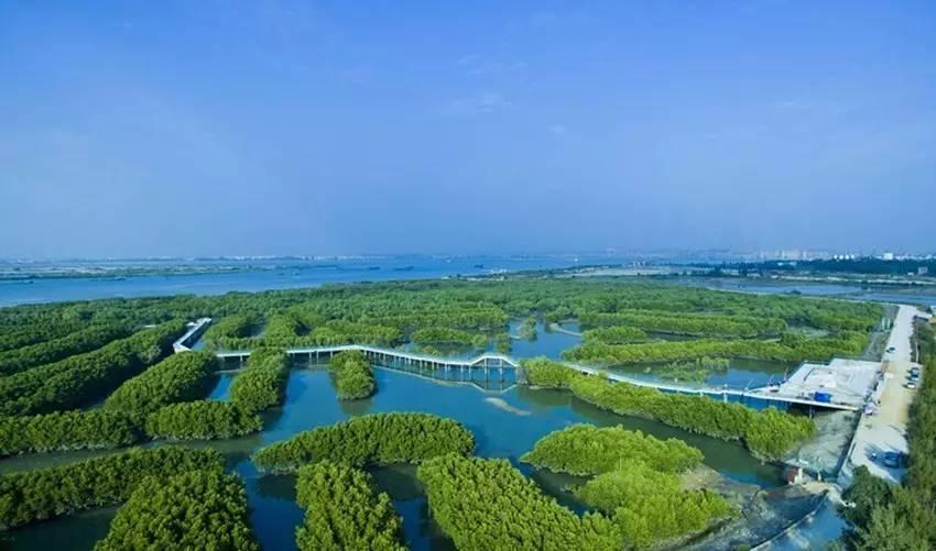 红树林探索区 旅游配套服务区等 茂名水东湾海洋公园景区 项目建设图片