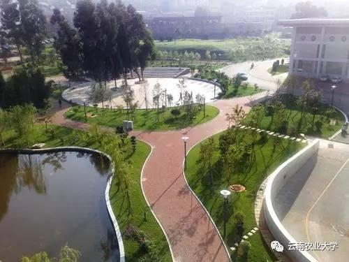 论 云南农业大学 的正确打开方式图片