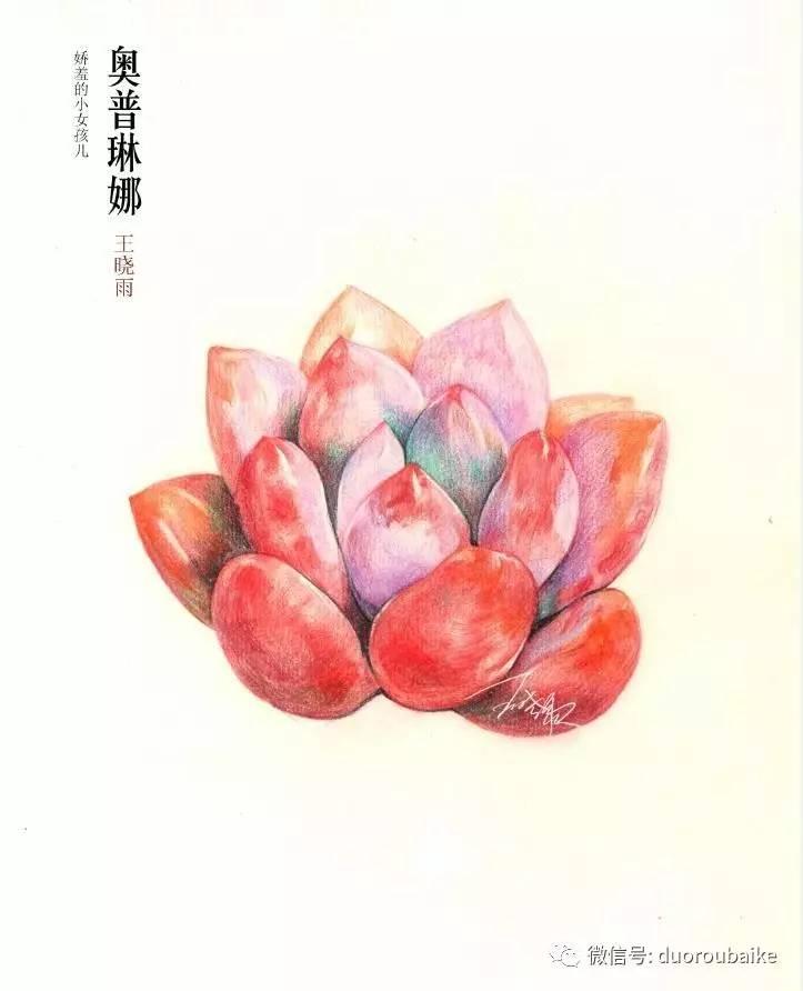 """""""寻找中国最美多肉""""手绘作品选登:河北邢台王晓雨"""