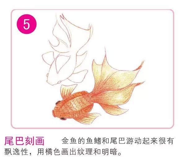 彩铅手绘鱼步骤