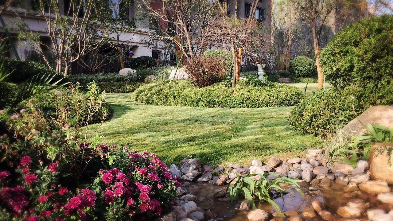 歌尔绿城 || 美丽邂逅 玫瑰园/桂花园实景样板优雅绽放