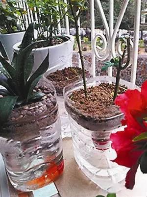 洗衣液瓶创意花盆 制作方法图解
