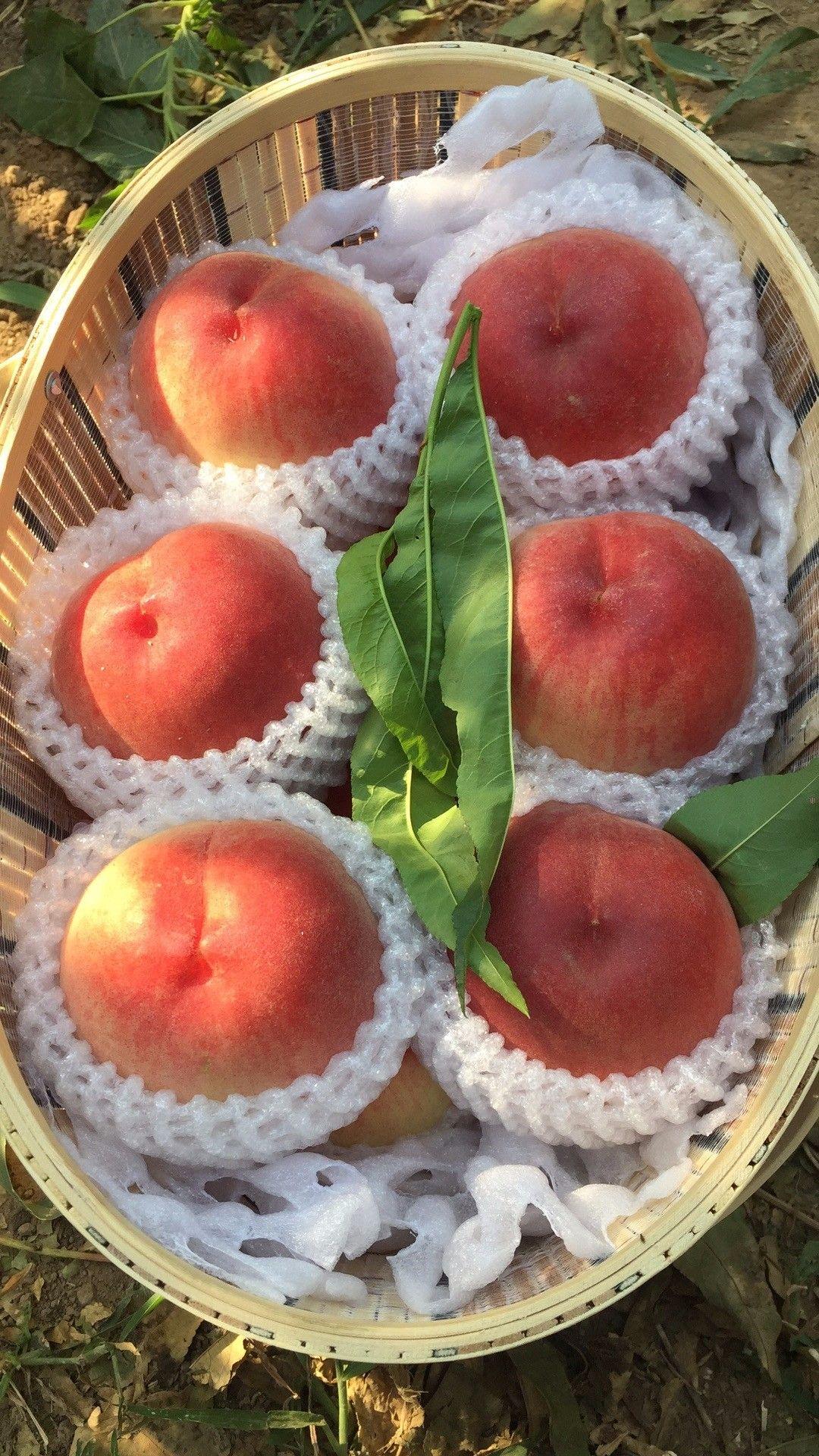 稚名桃子全部图片